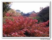 東福寺通天橋紅葉:2011_1125_092831.JPG