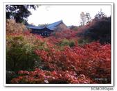 東福寺通天橋紅葉:2011_1125_092722.JPG