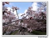 2012年關西追逐櫻花之旅-京都:2012_0407_081623.JPG