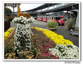 鳥取花回廊:2010_1109_133206.JPG