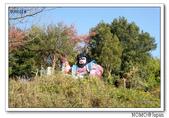 女木島:2013_1123_083231.JPG