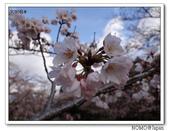 2012年關西追逐櫻花之旅-京都:2012_0407_081635.JPG