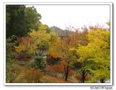 鳥取花回廊:2010_1109_133814.JPG