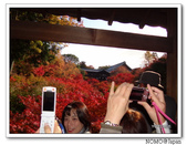 東福寺通天橋紅葉:2011_1125_092756.JPG
