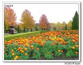 鳥取花回廊:2010_1109_135118.JPG