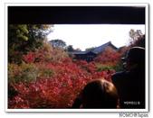 東福寺通天橋紅葉:2011_1125_092804.JPG