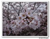 2012年關西追逐櫻花之旅-京都:2012_0407_083536.JPG