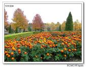 鳥取花回廊:2010_1109_135133.JPG