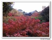 東福寺通天橋紅葉:2011_1125_092826.JPG