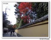 東福寺通天橋紅葉:2011_1125_091717.JPG