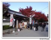 東福寺通天橋紅葉:2011_1125_092519.JPG