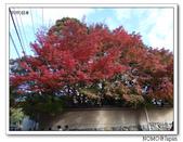 東福寺通天橋紅葉:2011_1125_091809.JPG