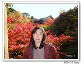 東福寺通天橋紅葉:2011_1125_093022.JPG