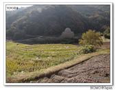 中山千枚田:2013_1124_095059.JPG