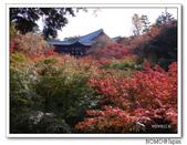 東福寺通天橋紅葉:2011_1125_092711.JPG