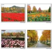 鳥取花回廊:相簿封面