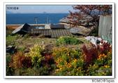 男木島:2013_1123_105509.jpg