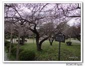 化解歷史恩怨的彥根城櫻花:2011_1123_120410.JPG