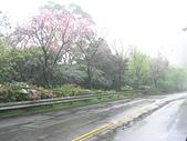 出差大台北華城:DSCN8355.JPG