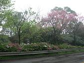 出差大台北華城:DSCN8354.JPG