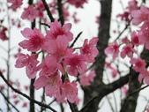 106.03.13春の拼圖: