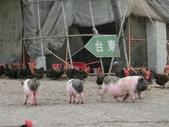 104.01.03 台東-初鹿牧場: