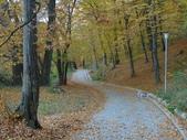 背景花紋:autumn-1083453_1920.jpg