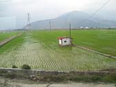池上綠色田野:IMG_0839.JPG