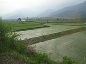 池上綠色田野:IMG_0829.JPG