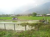 池上綠色田野:IMG_0830.JPG