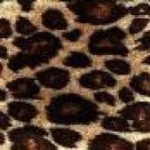 豹紋背景:256735401_x.jpg