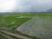 池上綠色田野:IMG_0840.JPG