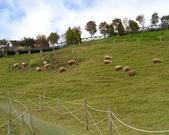 清境農場:IMG_0321.jpg