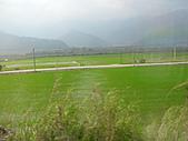 池上綠色田野:IMG_0832.JPG