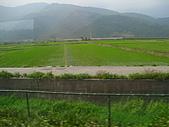 池上綠色田野:IMG_0834.JPG