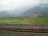池上綠色田野:IMG_0836.JPG