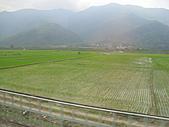 池上綠色田野:IMG_0825.JPG