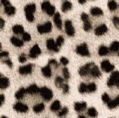 豹紋背景:256735474_x.jpg
