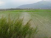 池上綠色田野:IMG_0838.JPG