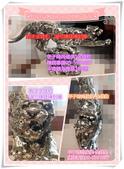 甲子時尚金錢豹-0924:三合一1.jpg