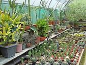 新竹縣 福祥仙人掌農園:栽種區內的盆栽