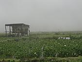 陽明山竹子湖 :CIMG1147.JPG
