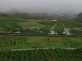 陽明山竹子湖 :CIMG1185.JPG