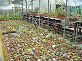 新竹縣 福祥仙人掌農園:為數眾多的小盆仙人掌
