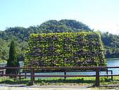 桃園大溪慈湖:P1060283.JPG