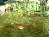 桃園大溪慈湖:P1060291.JPG