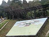 陽明山竹子湖 :CIMG1118.JPG