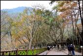 『楓』- 石門  2013.12.10: