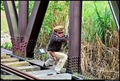 阿里山森林鐵路 - 竹崎車站-牛稠溪鐵橋  2013.12.29: