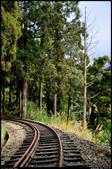 搭火車旅行 - 阿里山森林鐵路奮起湖一日遊  2014.2.6: